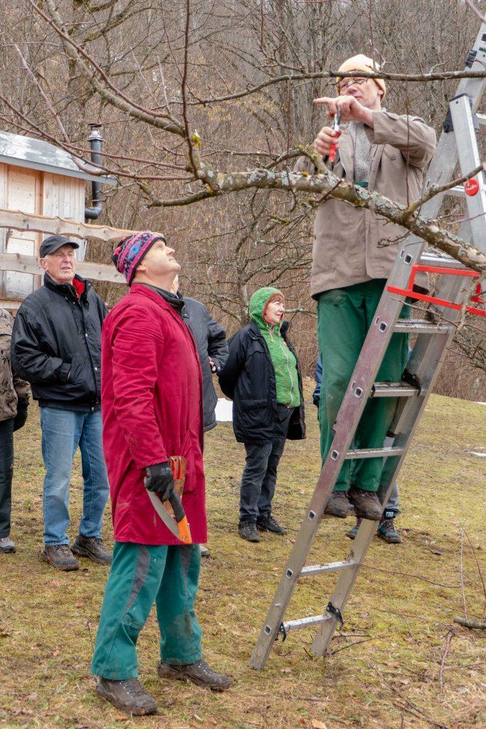Obstbaumschnittkurs im Gartenbauverein