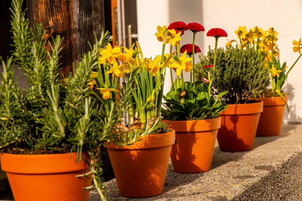 Frühjahrsschmuck zum Palmbuschenverkauf des Gartenbauvereins Unterwössen